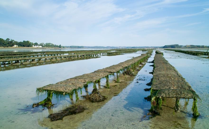 Austernfarmen